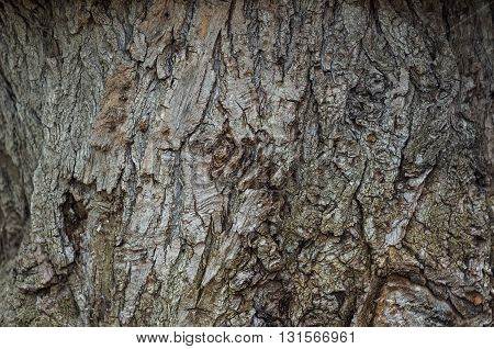 Bark Of Tree. Close-up. Vertical.Close-up. Background Texture.Gray.