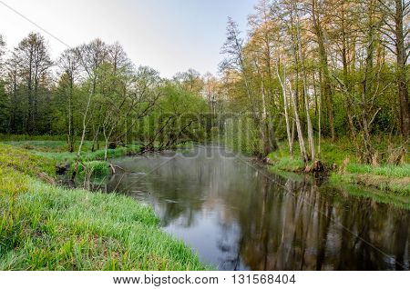 Forest river at dawn on a spring morning