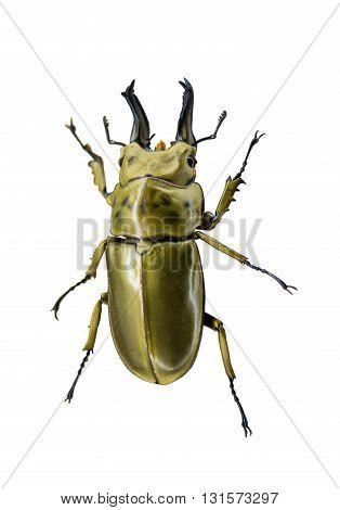 macro, nature Beetle isolated on white background