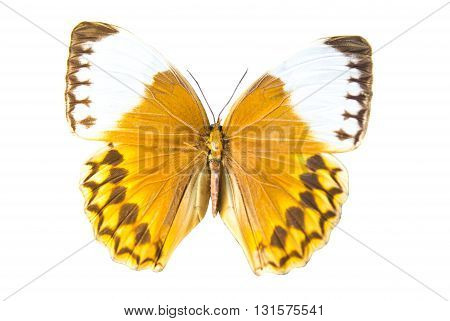 nature Beautiful Butterfly isolated on white background
