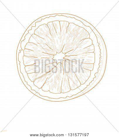 Orange fruit, drawing design - vector illustration.