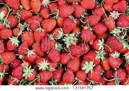 Background from freshly harvested strawberries, top view