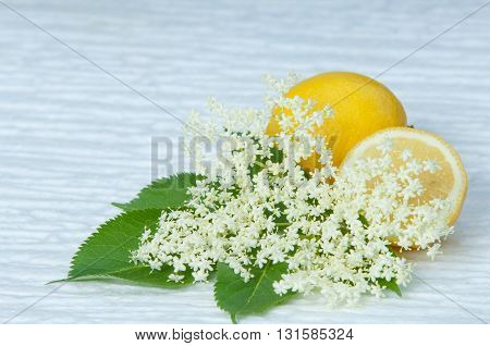 flowers elderberry Sambucus nigra and elderberry flower drink fresh raw