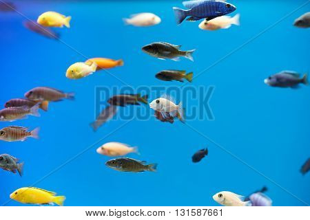 Variety Of Fish In A Tank