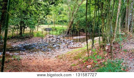Dark rainforest red earth of the jungle and Mountain stream at sunset Khao Sok National Park Surat Thani Province Thailand. Soft Focus.