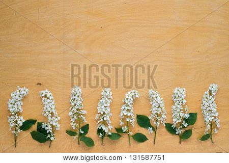 Twigs of blooming bird cherry laying out in a row on wooden board.