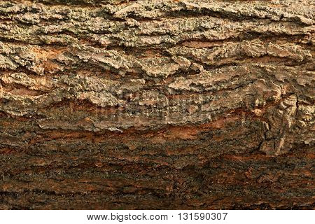 The bark of a tree, close up