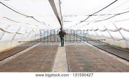 Farmer watering seedlings in greenhouse