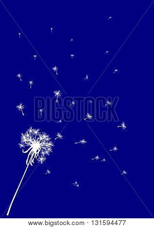 Dark blue dandelion background - vector illustration.