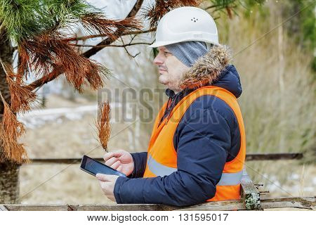 Forest officer with tablet PC checking withered tree branches