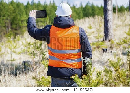 Forest officer take pictures on tablet PC near pine young growth