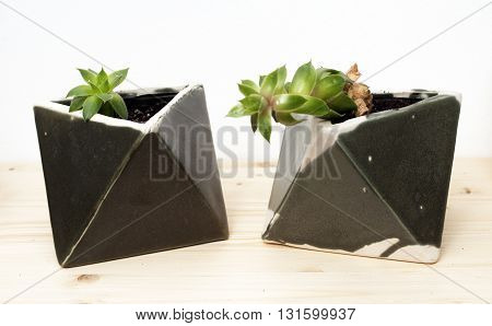 beautiful houseplants in geometric artistic pots isolated on white