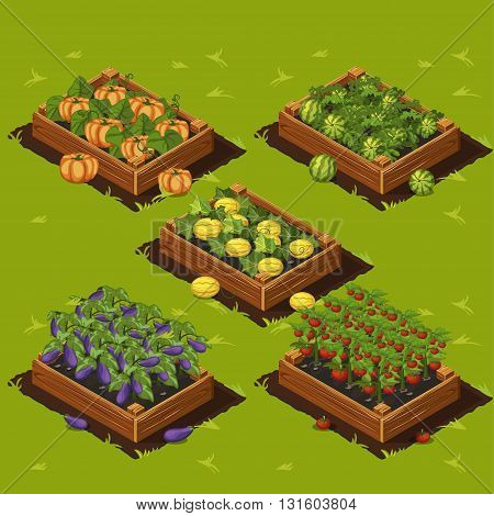 Vegetable Garden Wooden Box with watermelon melon eggplant pumpkin and tomatoes