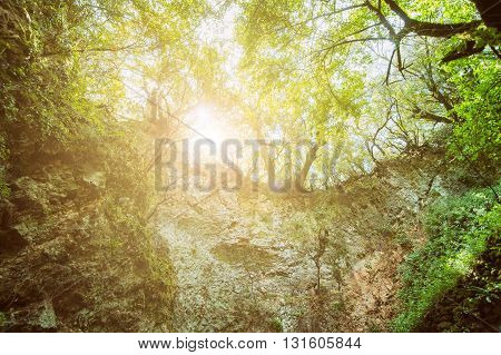 Mystery Forest With Entrance To The Cave, Sunlight Landscape