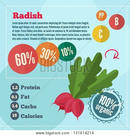 radishe infographics and vitamins in a flat style. Vector illustration. EPS 10