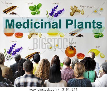 Medicinal Plants Natural Cure Herb Herbalism Concept