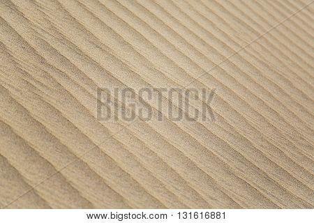 Close up view at desert sand texture