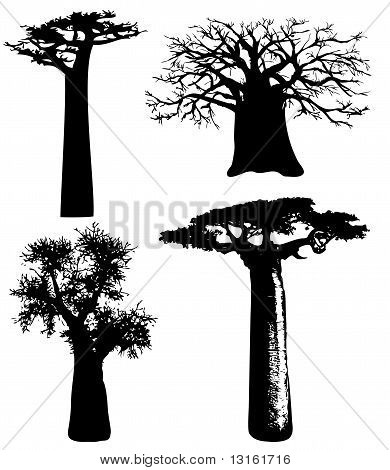Trees Of Africa - Vector