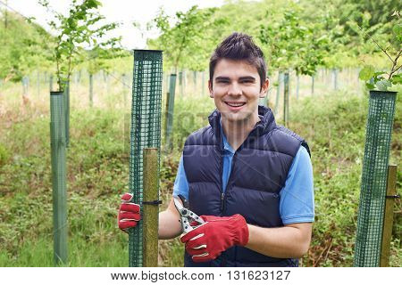 Portrait Of Forestry Worker Caring For Young Trees