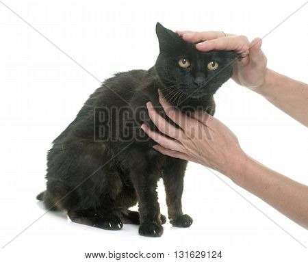 caressing old black cat in front of white background