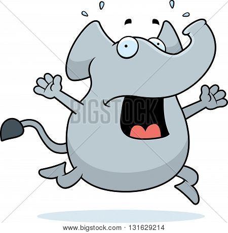 Elephant Panic
