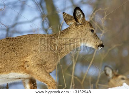 Beautiful backgroundwith a wild deer in the forest