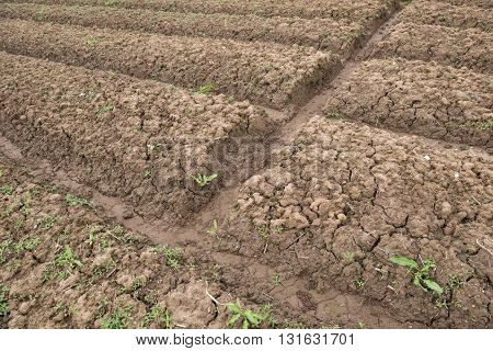 a cultivated field ready for sowing horizontal