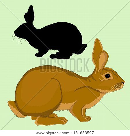 hare  adult black silhouette realistic vector illustration