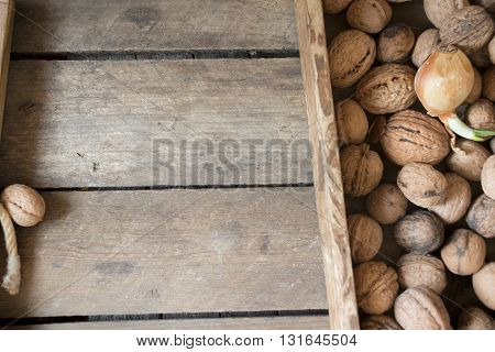 fresh walnuts in a wooden box on an old table