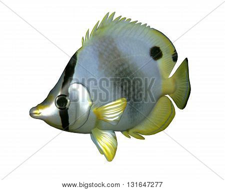 Butterflyfish isolated in white background - 3D render