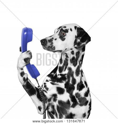 dog keeps phone in its paw -- isolated on white