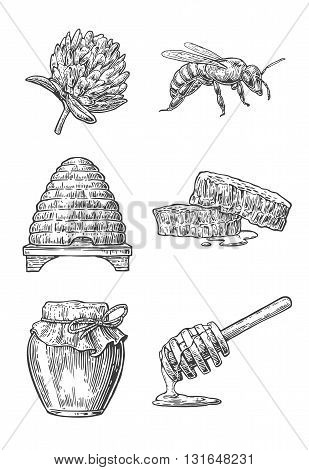 Honey set. Jars beer and honeycomb. Hand drawn design element. Vector engraved illustration.