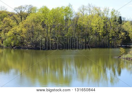 Trees reflecting in the water during spring