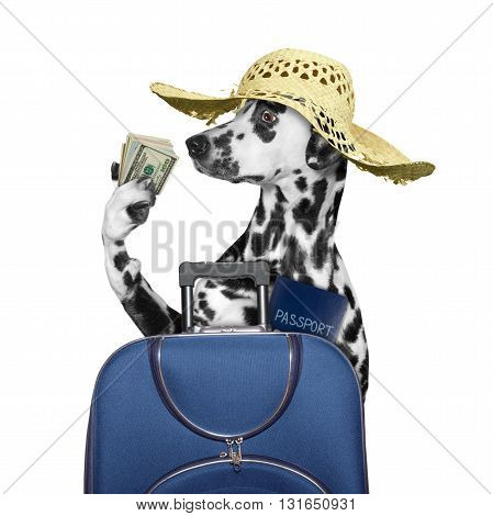 dog is going on a trip to travel with a suitcase -- isolated on white
