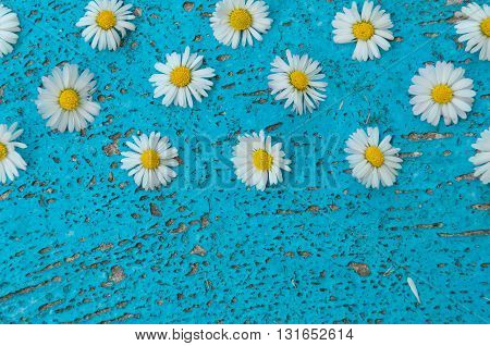 Light blue old textured background with daisy flowers turquoise background vintage top view