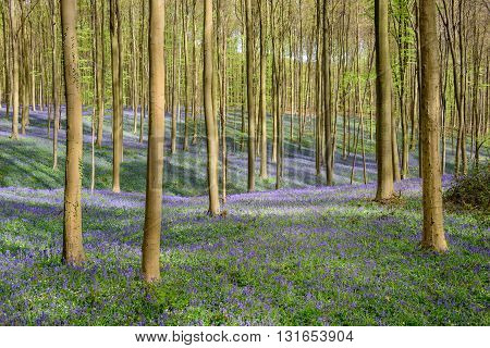 Springtime Blue Beach Forest (8)