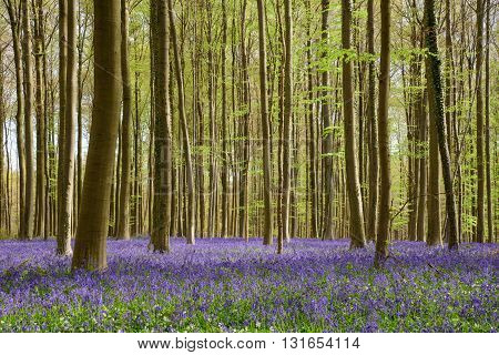 Springtime Blue Beach Forest (6)