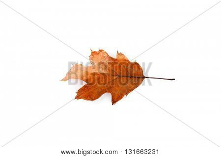 Dry leaf, isolated on white