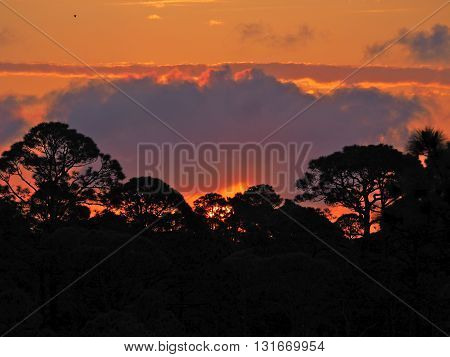 Colorful Sunrise against the Silhouetted Trees and Clouds