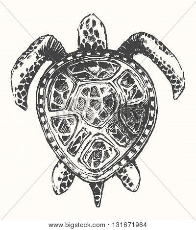 Hand drawn turtle illustration, logo template sketch