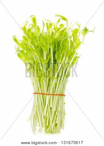 Sweet Pea Sprouts Isolated On White Background