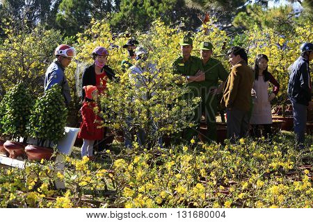 Dalat, Vietnam, February 3,2016: People buying Hoa Mai tree (Ochna Integerrima) flower, for decoration house in traditional lunar new year in Vietnam