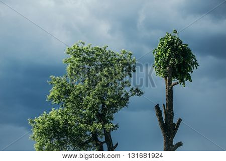 Tree Top On Blue Sky