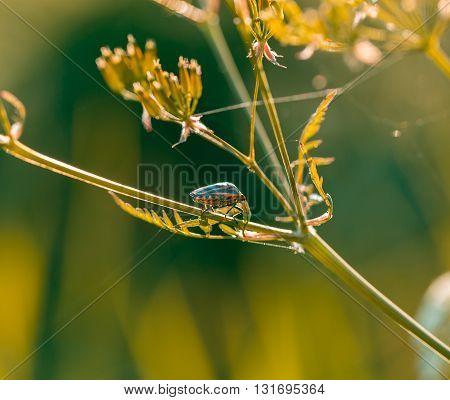 Beetle Sitting On Plant.