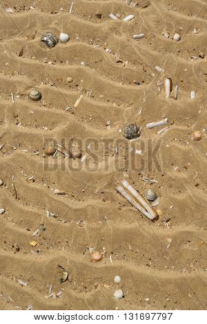Razor shells on on sandy beach during low tide in Wells-next-the-sea England