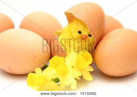 Chicken, Egg And Flowers