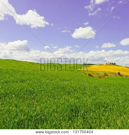 Green Sloping Meadows of Tuscany inthe Spring