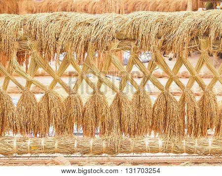 Rice. Rice seeds. Paddy rice. Golden rice.