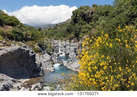 Alcantara gorge with blooming yellow broom flowers at Sicily Italy