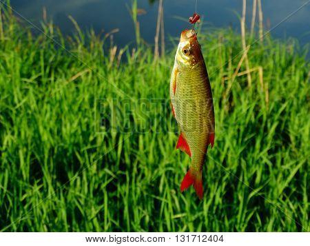 Fishing on the lake fish hooks bait worm